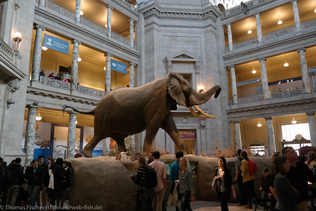 National Museum of Natural History (Smithsonian), Washington D.C. (03/08/2015)